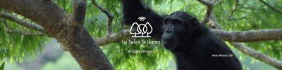 La Selva Te Llama… Responde el llamado