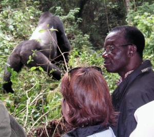 Crónica de la visita al gorila que sobrevivió al coltan