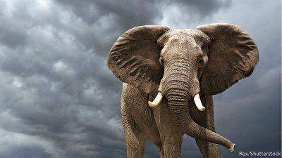 Proteja a los elefantes. Son un reflejo científico de los  humanos.