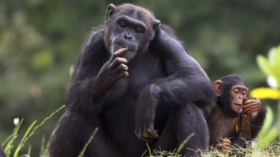 Conservación Biosocial: Métodos biológicos y etnográficos para el estudio de las interacciones primate – humano.