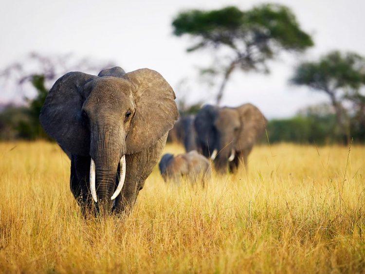 Elefantes en su día