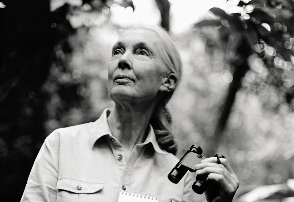 Regreso de Jane Goodall a la Argentina