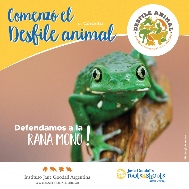 Placa-Comienzo-RanaMono
