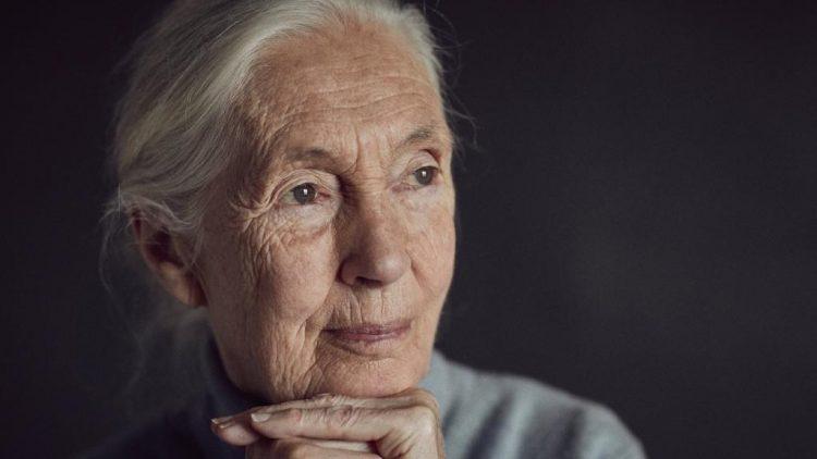 "Dra. Jane Goodall: ""No fue nada fácil"""