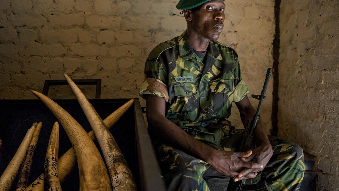 Cómo la matanza de elefantes financia el terror en África.