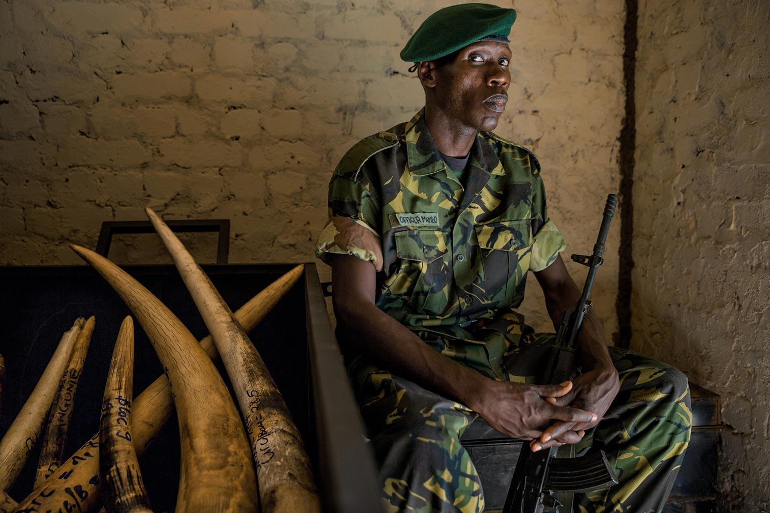 Cómo la matanza de elefantes financia el terror en África ...