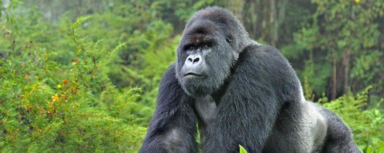 ¿Cuál es el sentido de salvar especies en peligro de extinción?