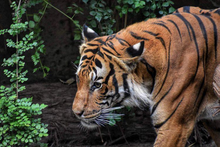 ¿Para qué o para quién debemos conservar la biodiversidad?