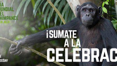 Día Mundial del Chimpancé (o el día en que Jane Goodall cambió el futuro de los primates para siempre)