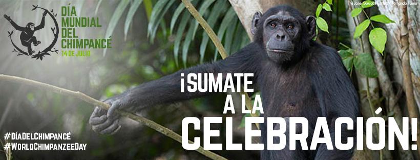 facebook-header-chimps-ESPANIOL