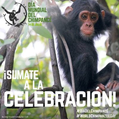 Este 14 de julio anunciamos el primer Día Mundial del Chimpancé