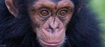 Tenga cuidado antes de compartir: Proteger a los grandes Simios en las Redes Sociales