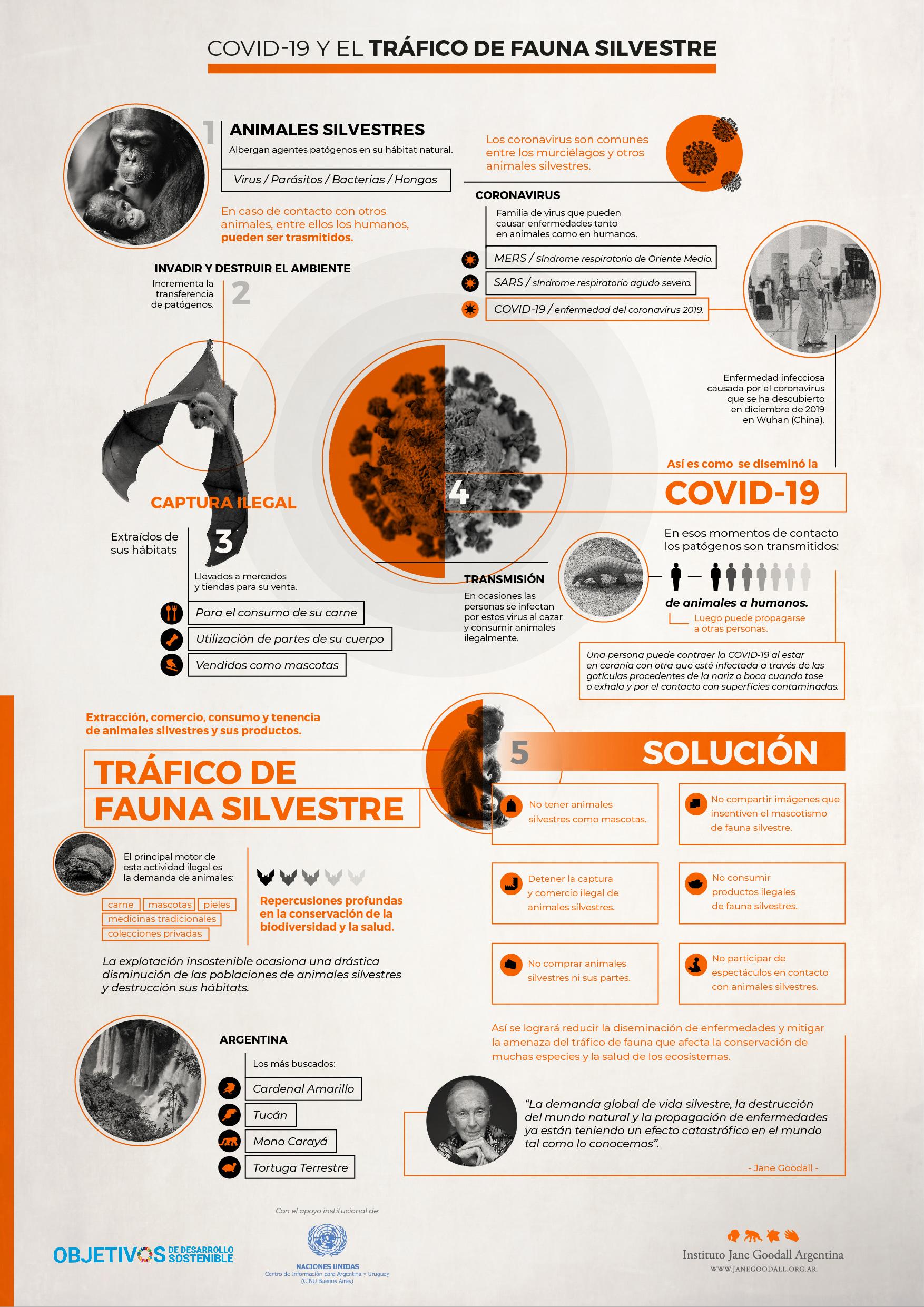 Infografía_Tráfico