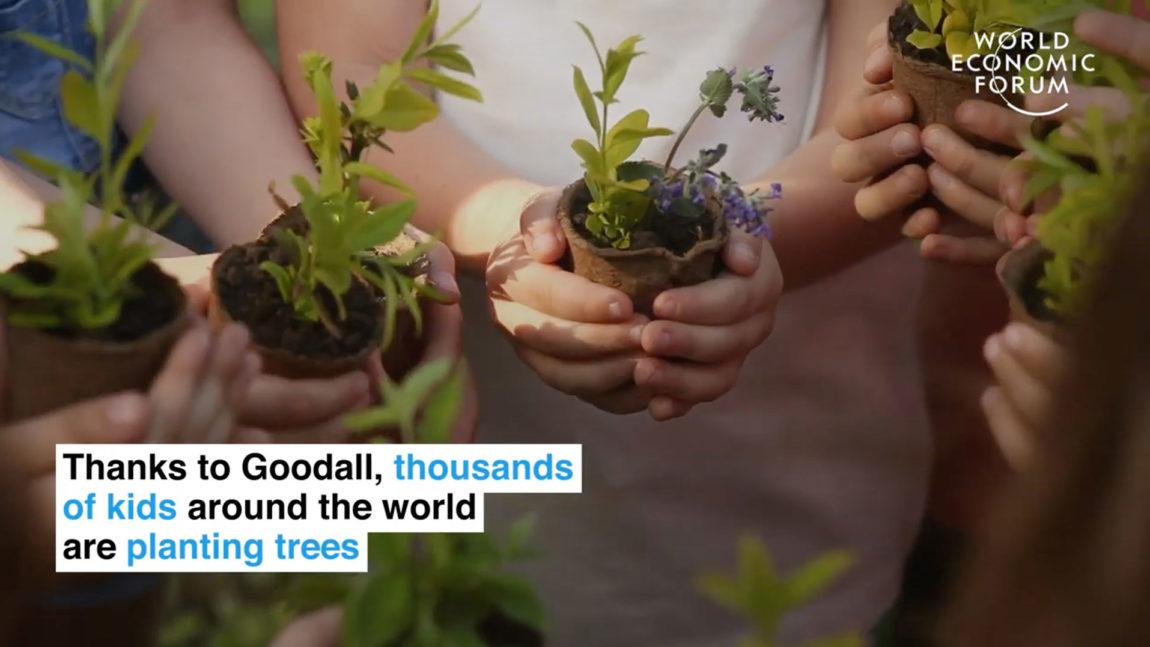 Jane Goodall acerca de la importancia de plantar árboles